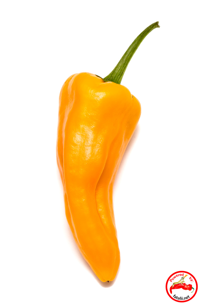615d3bb45b0d Fatalii Seeds – Seeds for People Passionate about Chili Peppers