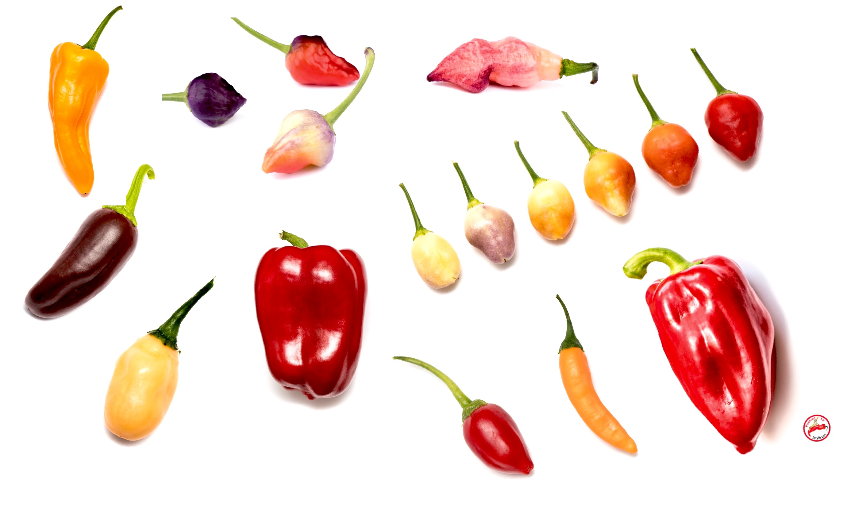 Fatalii's Recommended Favorites!