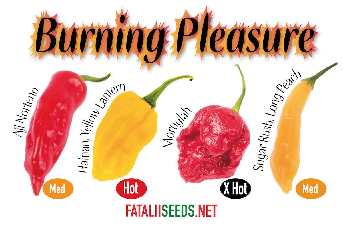 Burning Pleasure (Seed Kit)