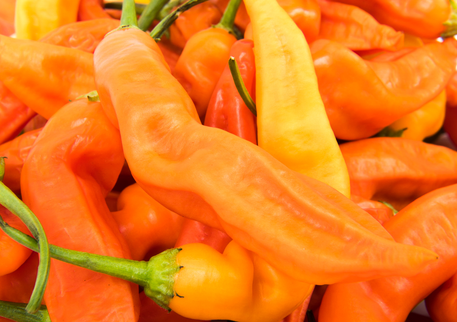 COMBINED S//H! RARE Orange Salsa Pepper Seeds SEE OUR STORE