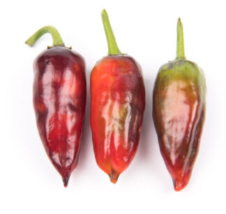 28 seeds per packet Manzano Pepper Seeds ORANGE TYPE