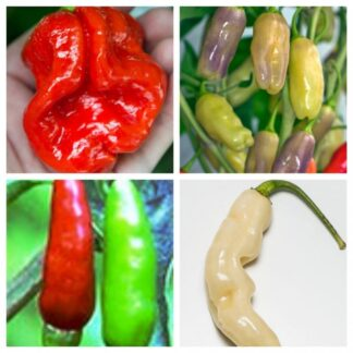 Fatalii's UNIQUE COLLECTION (Chili Seed Kit)