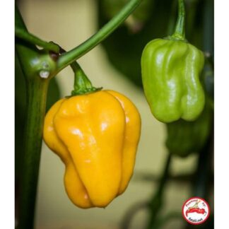 Habanero, West Indian Yellow