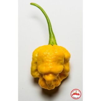 7pot Brain Strain Yellow