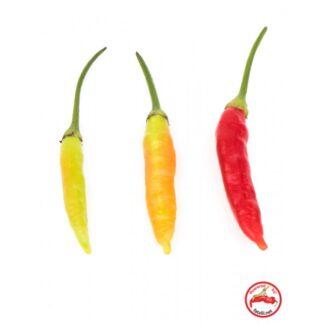 Aji Ethiopian Fire