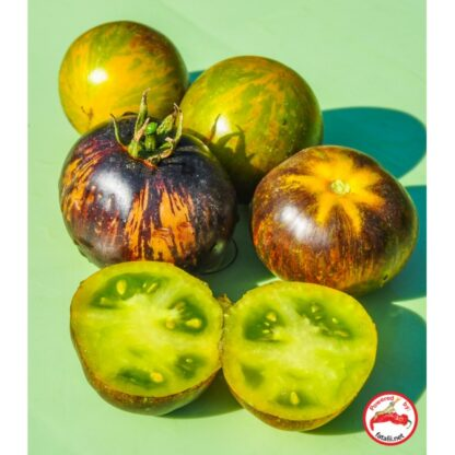 TOMATO: Blue Green Zebra