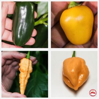Fatalii's CHILIFEST COLLECTION (Chili Seed Kit)