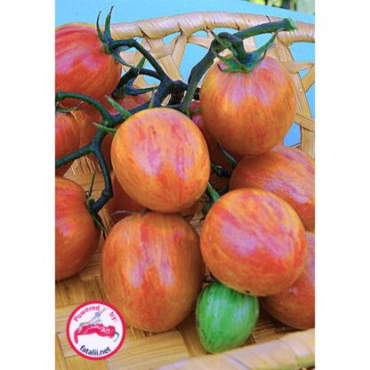 TOMATO: Pink Bumble Bee