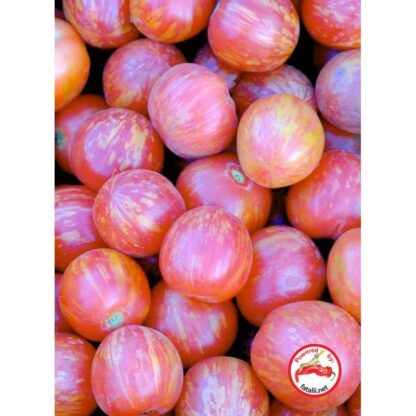 TOMATO: Vernissage Pink