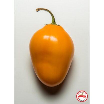 Rocoto, Guatemala Orange