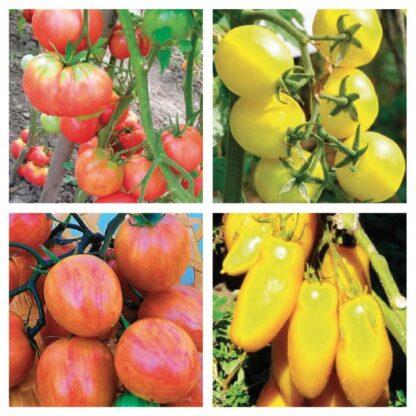 Fatalii's SALSA EXPLOSION (Tomato Seed Kit)