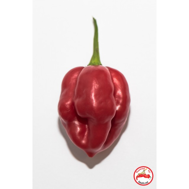 Scotch Bonnet, Red